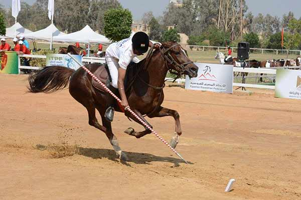 IOA equestrian