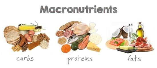 Macronutrients Matter