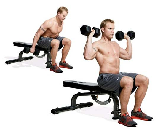 Seated Dumbbell Clean